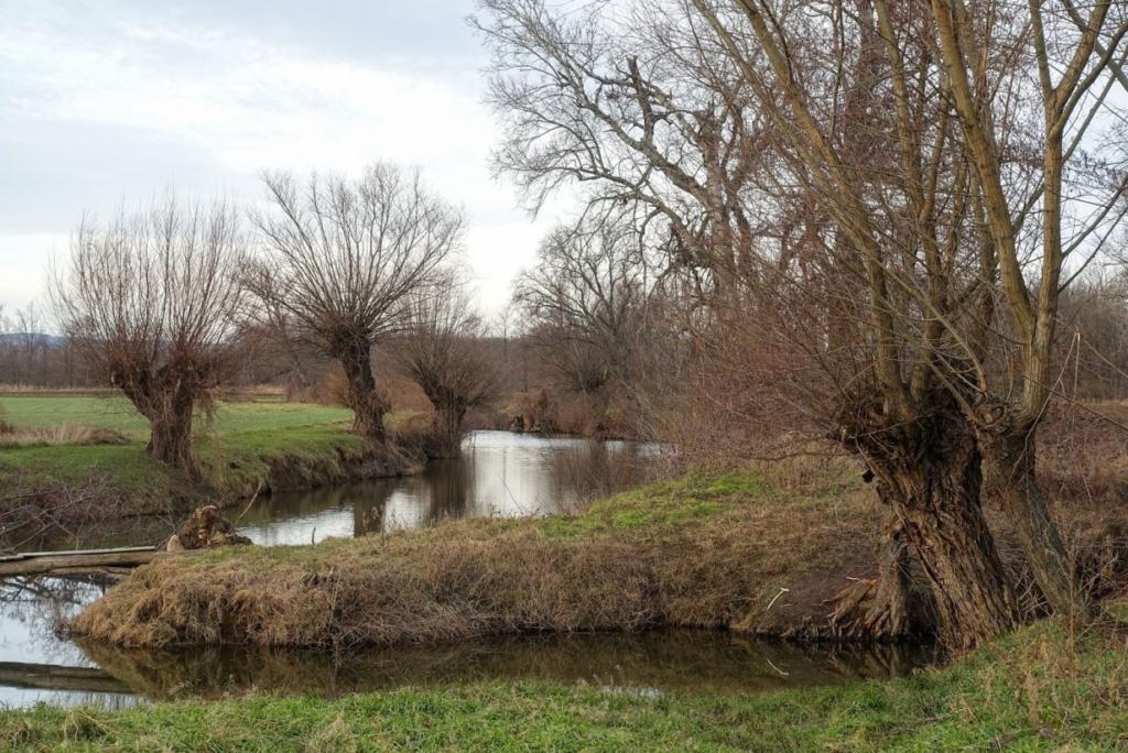 Hlavaté vrby vždy byly neodmyslitelnou součástí břehů vodních toků.