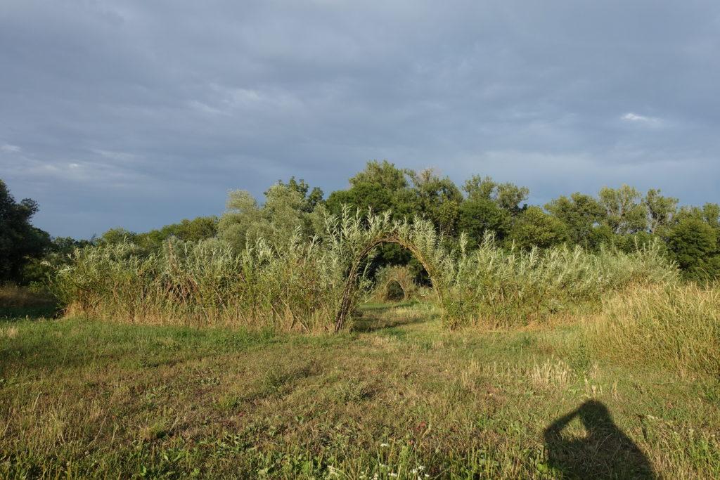 Ohrada vytvořená z živých vrbových prutů.