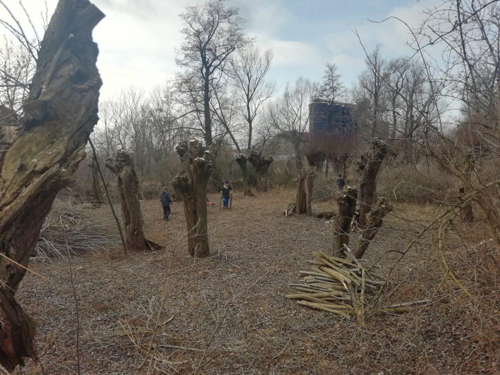 Ořezávání vrb u obce Vojkovice
