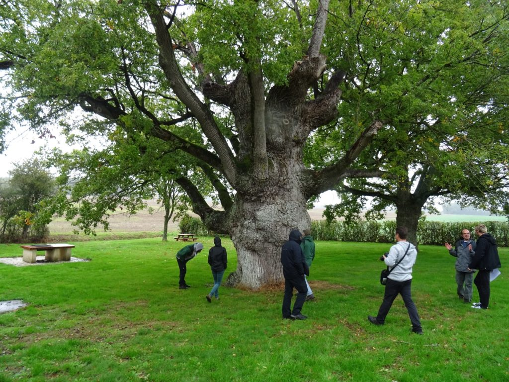 """""""Trogne de Monsieur Jourdain"""", mohutný ořezávaný dub u obce La Chapelle-Vicomtesse. Dominique Mansion (druhý zprava) vysvětluje příběh stromu."""
