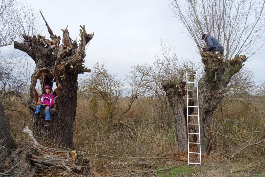 Ořez vrb v rámci projektu, Štěpnice u Podivína
