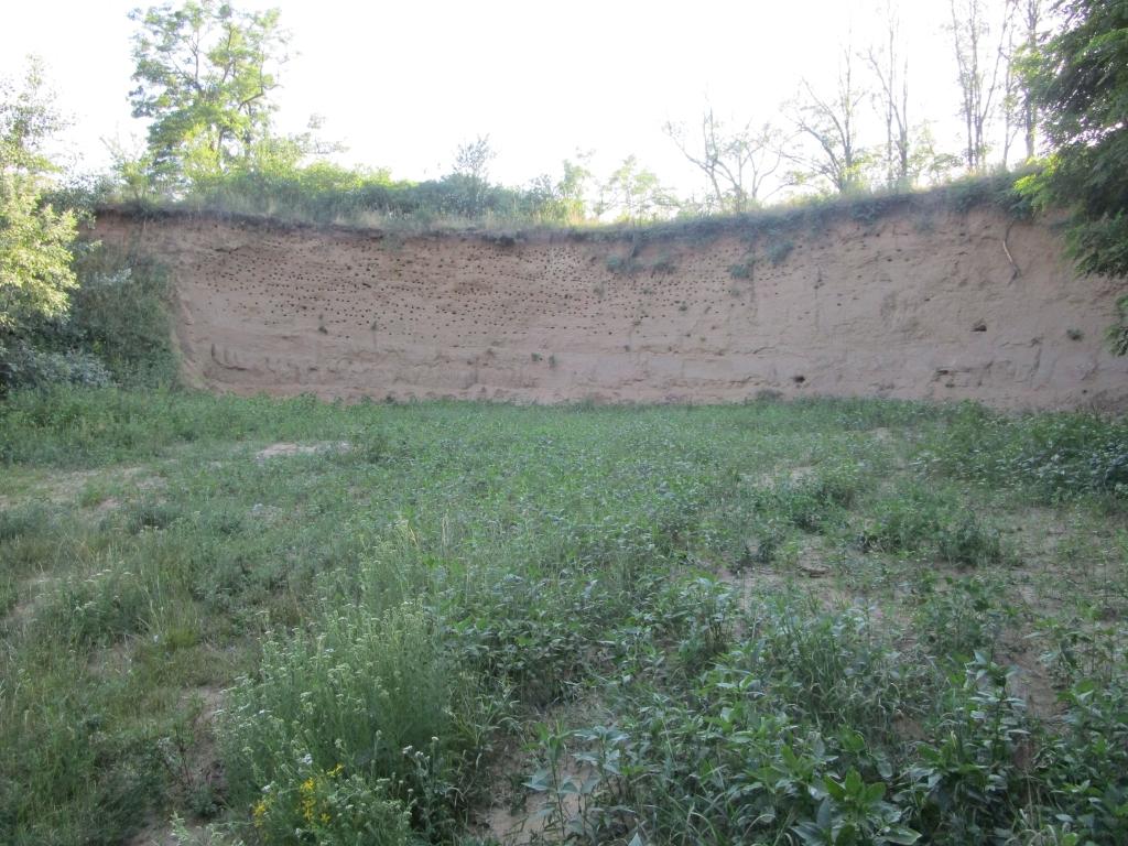 Obnovená hnízdní stěna pro břehule u Pouzdřan, jižní Morava.